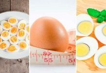egg diet to lose weight